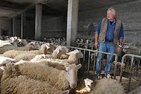 - holiday farm Cascina Raflazz in Paroldo (Cuneo),  ...the owner Claudio Adami care to sheepfold....- agriturismo Cascina Raflazz a Paroldo (Cuneo), il titolare Claudio Adami accudisce alle pecore nell'ovile