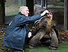 ZSL London Zoo Annual Weigh-in at London Zoo, Regent's Park, London, Great Britain <br /> 26th August 2015 <br /> <br /> Dirk the Galapagos tortoise weighed in at 162 Kg <br /> <br /> <br /> Photograph by Elliott Franks <br /> Image licensed to Elliott Franks Photography Services