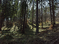 FOREST_LOCATION_90209