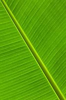 Tropical palm leaf pattern.