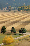 Rows formed after the harvest in the fields in the Kootenai valley