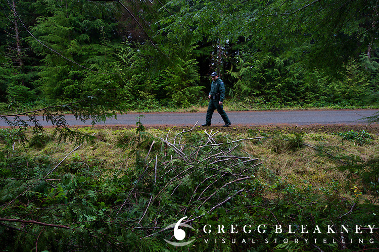 DNR officer Jared Eison discovers dozens of western white pines pillaged for their boughs.  He notes the location for future follow-up.  Olympic Peninsula, WA State