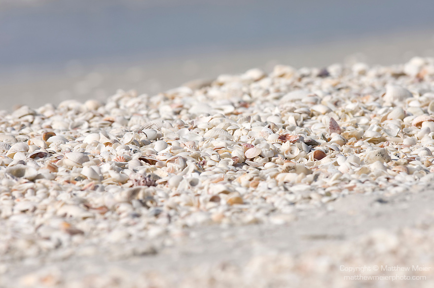 Sanibel Island, Florida; seashells on the beach, Gulf of Mexico side, west facing © Matthew Meier Photography, matthewmeierphoto.com All Rights Reserved