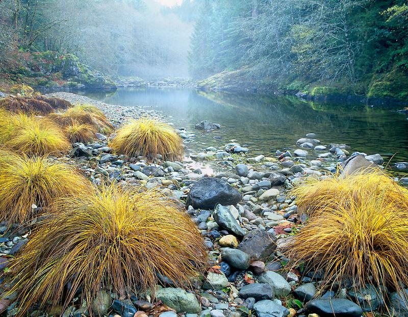 Fall colored grasses along Quartzville Creek Wild and Scenic River, Oregon