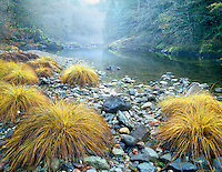 Fall colored grasses along Quartzville Creek Wild and Scenic River, Oregon