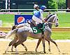 Sir Rockport at Delaware Park on 6/13/16