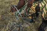 Park scout in anti-poaching patrol with confiscated snares, Kafue National Park, Zambia