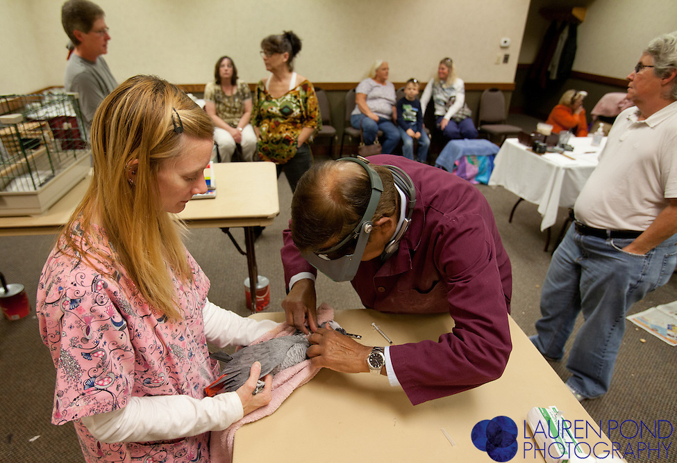 Avian vet Dr. Ram Mohan, of New Albany Ohio, and his assistant of about 20 years, Elise Robinson, of Columbus, treat African Grey parrots belonging to Jan Miller and Rene Beck, of Marietta, at a semiannual bird clinic in Marietta, Ohio, on Oct. 17, 2012.