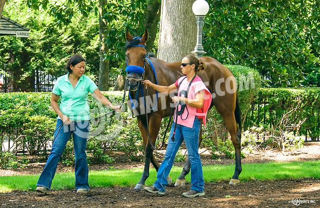 No Bull Addiction at Delaware Park on 7/21/16