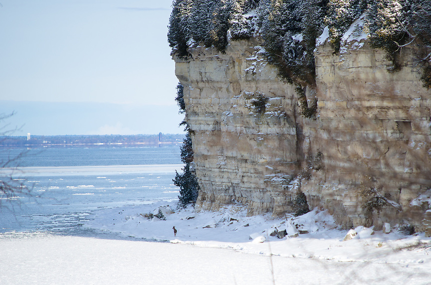 A whitetail deer wandering the shoreline during early winter. Fayette State Park, Garden Peninsula.
