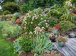 Indianola, WA: Summer perennial garden featruing roses, peonies, iris and sedums
