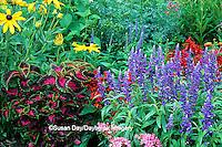 63821-085.06 Sun Coleus, Blue Victoria Salvia, Pink Pentas, Salvia, Lantana Patriot Firewagon & Black-eyed Susans  Marion Co.  IL