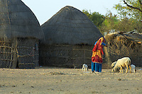 Rural area between Bikaner and Mandava in the Thar Desert Rajasthan India