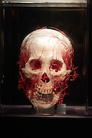 NO FEE PICTURES.1/2/12 A skull at the opening of The Human Body Exhibition—an all new exhibition featuring more than 200 full and partial real human body specimens, makes its world debut at The Ambassador Theatre this Spring. This incredible exhibition showcases carefully dissected specimens to provide a window into the miraculous way the body functions and gives visitors the opportunity to see exactly what lies beneath their skin. The Human Body Exhibition today Thursday 02 February, 2012 at The Ambassador Theatre for a limited engagement. Picture:Arthur Carron/Collins