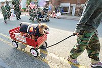 A dog named Leatherneck dressed in a marine uniform is pulled in a wagon during the Hatfield Memorial Day Parade Monday May 25, 2015 in Hatfield, Pennsylvania. (Photo by William Thomas Cain/Cain Images)