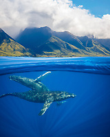 A split image of a pair of humpback whales, Megaptera novaeangliae, underwater in front of the West Maui Mountains just south of Lahaina, Hawaii, USA, Pacific Ocean, digital composite