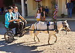 Old Bethpage, New York, U.S. 29th September 2013. A young woman and man ride a pony cart through the village street at The Long Island Fair. A yearly event since 1842, the county fair is now held at a reconstructed fairground at Old Bethpage Village Restoration.