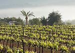 Weingarten, San Mateu, Ibiza