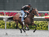 Know More at morning workouts at Del Mar Race Course in Del Mar, California on August 25, 2012.