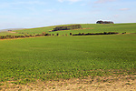 Chalk landscape on Roundway Down, North Wessex Downs, Wiltshire, England, UK
