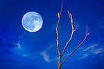 A Full Moon On The Rise Against A Deep Blue Twilight Sky With Wispy Clouds And A Leafless Tree, An Abstract  Digital Composite