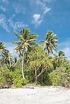The coastline on the northern point of Funafuti Atoll, Tuvalu