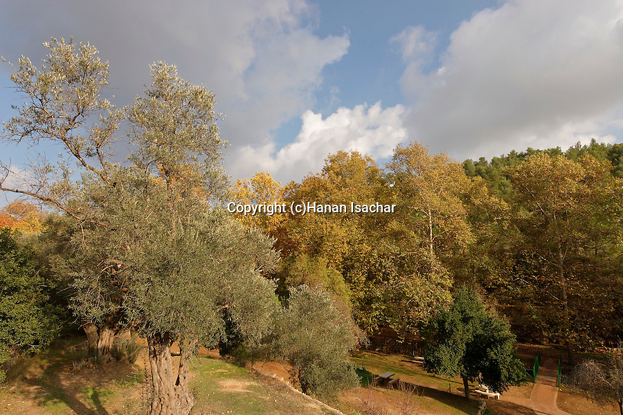 Israel, Jerusalem Mountains. Ein Hemed National Park