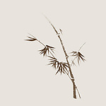 Bamboo stalk with young leaves, delicate refined design based on rice paper of Japanese Zen ink painting artwork. Brown bamboo on light beige ivory background.