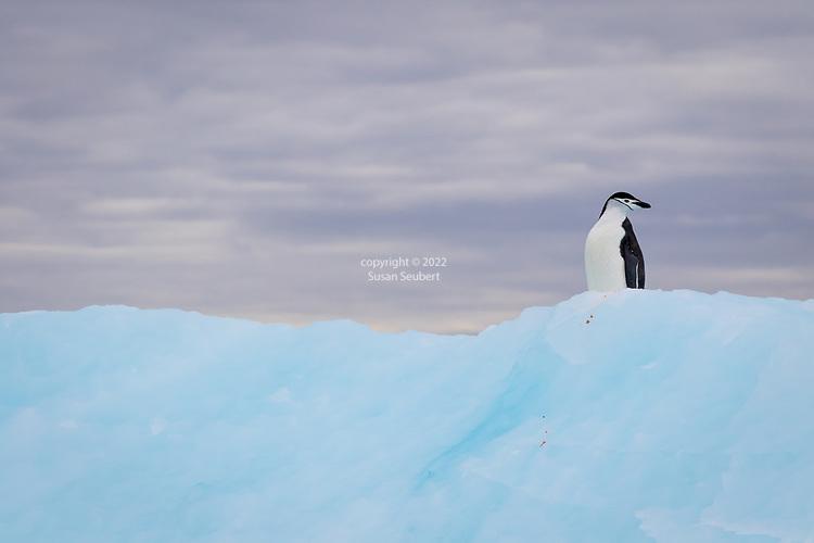 False Bay, Antarctica