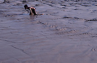 CIHILDREN PLAYING IN MUDDY WATER