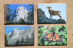 FB-M19   Lily Rock with snow<br /> FB-M28   Lily Rock without snow<br /> FB-M     Bighorn Sheep<br /> FB-M42   Monarch butterfly on flower