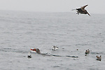 Sea Lion With Fish