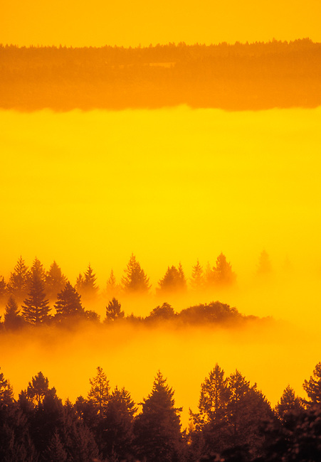 Fog covers Napa Valley at sunrise, as seen from Spring Mountain