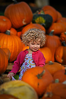 A 2-year-old searches for the best pumpkins among the hundreds displayed for sale in the front yard of the Masonic Temple in Westerville, OH. The pumpkins are a fund raiser for Boy Scout Troop 560.