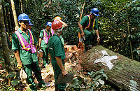Foresters cutting trees in the Amazon Forest