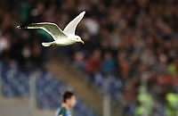ption:<br />