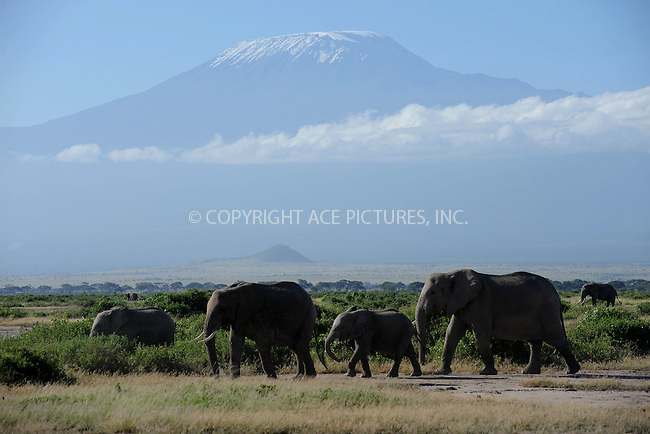 WWW.ACEPIXS.COM<br /> February 28, 2016 New York City<br /> <br /> Mount Kilimanjaro and elephants seen in Amboseli National Park on February 28, 2016 in Kenya.<br /> <br /> Credit: Kristin Callahan<br /> web: http://www.acepixs.com