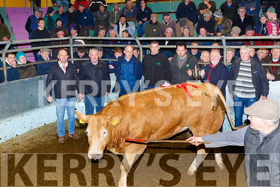 The Supreme Champion Heifer at the Kingdom Co-op Mart Tralee went to a CH Lot# 16, weighing 755Kg, born Jan 2018 sold for €2750.  Pictured here l-r; Philip Healy(Mart Manager), Michael Costello, Mark Collins(Purchaser Slaney Meats), John McDonnell, Liam O'Sullivan(Owner), Edward Kelliher(Sponsor Kellihers Mills).