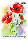 Kris, FLOWERS, BLUMEN, FLORES, paintings+++++,PLKKK3528,#f#, EVERYDAY