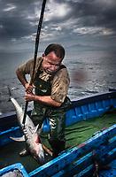 """France, Aquitaine, Pyrénées-Atlantiques, Pays Basque,  Saint-Jean-de-Luz:  le Thonier Canneur ou Thonier Bolincheur """"Aïrosa""""  à la pêche au thon à la  canne,les rampes à eau  sont mises en action pour camoufler le bateau.La pêche se  pratique au vif avec comme appât vivant (peïta) de la sardine //  France, Pyrenees Atlantiques, Basque Country, Saint-Jean-de-Luz: Aïrosa Tuna Pole and Line fishing - Auto N°:2014-149, Auto N°:2014-150, Auto N°:2014-151, Auto N°:2014-152, Auto N°:2014-153, Auto N°:2014-154, Auto N°:2014-155"""