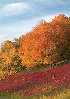 Autumn foilage