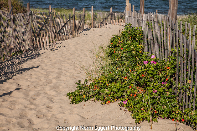 A sandy path that leads to Ryder Beach in Truro, Massachusetts