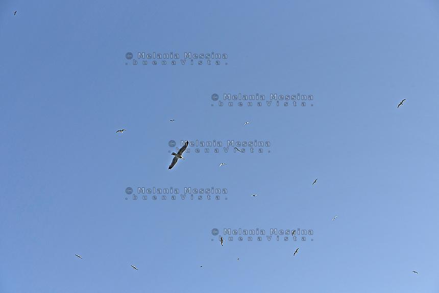 Seagulls flying in Levanzo sky, Egadi islands