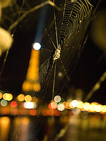 Common spider in Paris