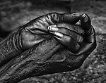 AFUA'S HANDS--The hands of Agua Nyame have seen 85 coacoa harvests in the village of Odaho, Ghana, West Africa.