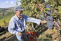 - grape harvest at &quot;Marasi&quot; wine farm in the province of Piacenza<br /> <br /> - raccolta dell'uva presso l' azienda agricola vitivinicola &quot;Marasi&quot; in provincia di Piacenza