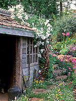 Rustic shed, Butterfly Garden, streamside water plantings. Lush primula, irises, roses Rosa vine climbing on shed roof, running water stream waterfall garden, gorgeous flowers, naturalistic, garden tools, attract wildlife to the garden with great charm in spring