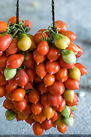 Detail of bunches of freshly harvested pomodorino piennolo del Vesuvio tomatoes hanging on string to dry