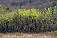 Spring foliage shows off it's color almost ss well as in the fall, Sauk County, Wisconsin