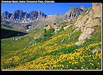 Alpine wildflowers in the American Basin (12,300 feet) below Cinnamon Pass, San Juan Mountains, southwest Colorado, USA